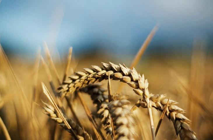 Министр финансов поручил ГФС иГосказначейству восстановить возмещение НДС аграриям