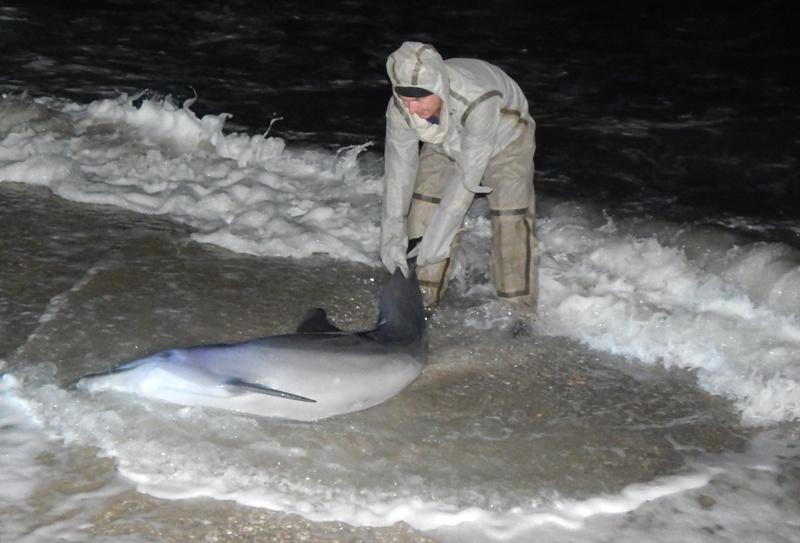 ВХерсонской области спасли дельфина, которого вынесло волнами наберег