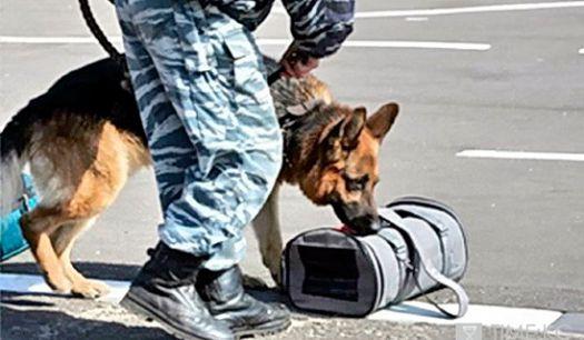 Наши служебно-розыскная собака с места кражи медленно подошел