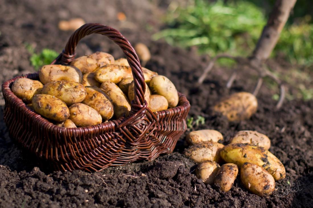 1,8 млн тонн зерновых собрано сполей Орловской области